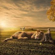 El niño y el león